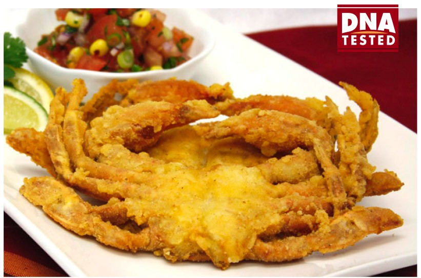 "BREADED SOFT SHELL CRABS<br>Pack Size:<span class=""custom-label-text"">36CT</span><br>Item Code:<span class=""custom-label-text"">HD24</span> Image"